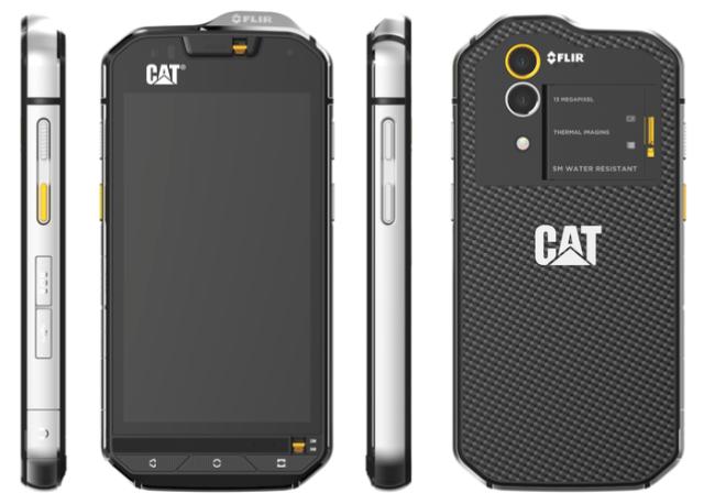 cats60_1
