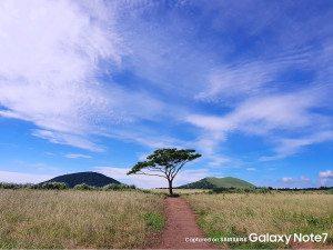 Samsung-Galaxy-Note-7-official-camera-samples (4)