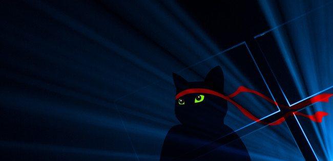 W10-Anniversary-Ninjacat-1280x620-A