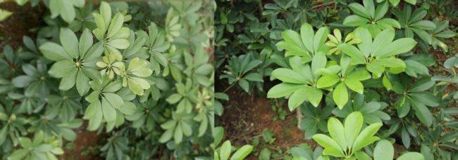 Vlevo snímek pořízení AllCall Bro, vpravo z SLR