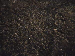 S10 nocni rezim