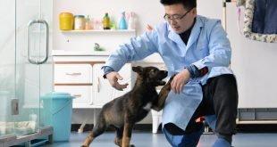 china police dog