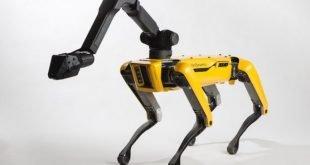 spot dog robot