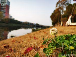 Huawei P40 fotky 4