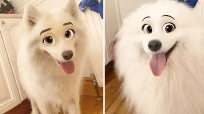 disney filtr na psy
