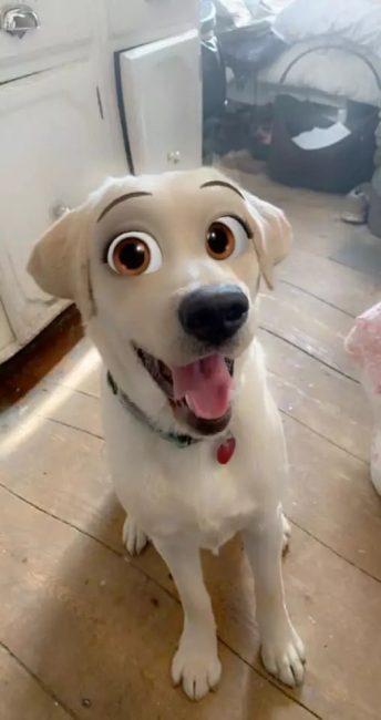 disney filtr na psy 02