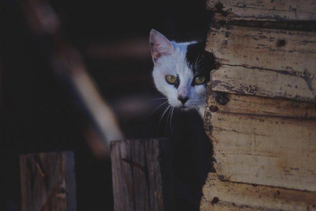 date cat